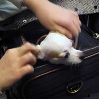 Pets Moving Overseas Pet Relocation